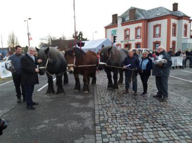 Inauguration de la 24ème vitrine du Cheval de Trait avec la participation de l'Association des Chevaux de Trait de Thiérache