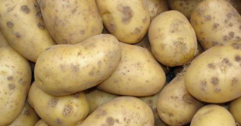 Pommes de terre des Hauts-de-France