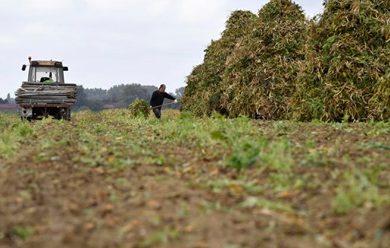 La Région lance un Plan Agro-écologie en Hauts-de-France